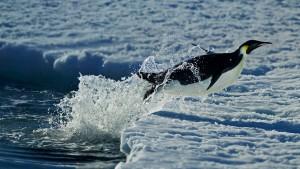 CapeWAPenguin_Antarctica_1366x768