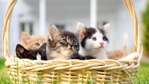 CuteCloud_KittensInABasket_1366x768