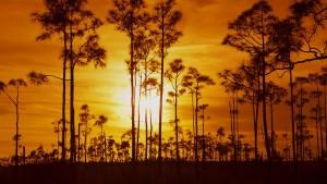 EvergladesTrees_FloridaUSA