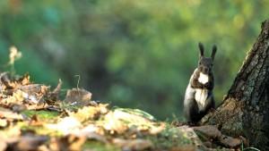 HokkaidoSquirrel