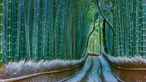 KyotoBamboo_Japan_1920x1080
