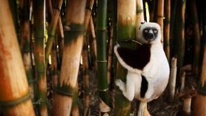 LemurMadagascar