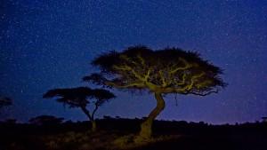 LewaAcacia_Kenya_1920x1080