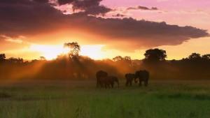 MasaiMaraReserveElephantsKenya