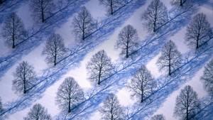 TreesInWinterLandscape