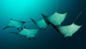 UnderwaterRays_SolomonIslands_1920x1080