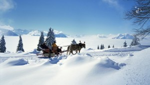 horseSleighSwitzerland