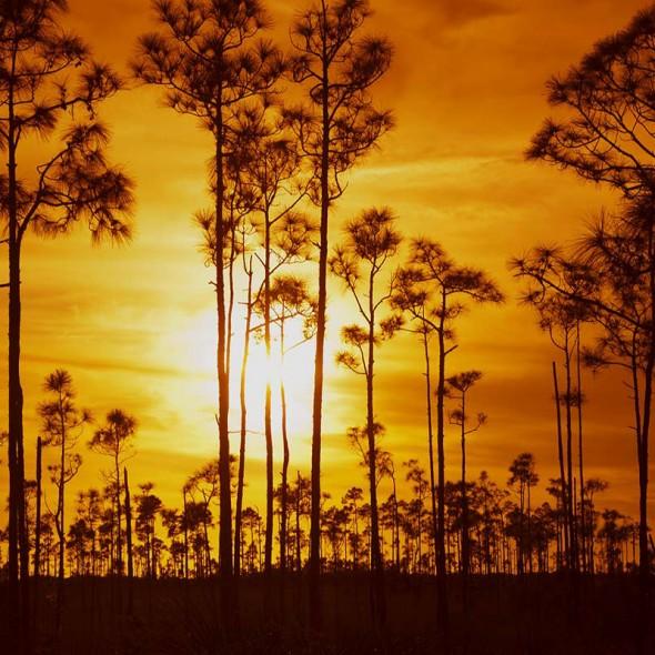 EvergladesTrees_FloridaUSA2